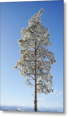 Winter Tree Germany Metal Print