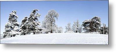 Winter Tree Line Metal Print