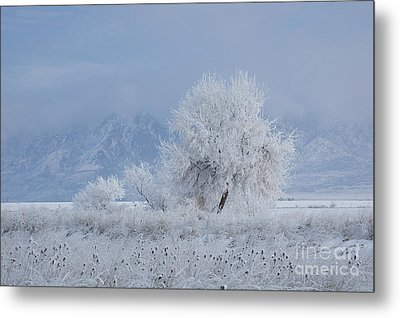 Winter Tree Metal Print by Nicole Markmann Nelson