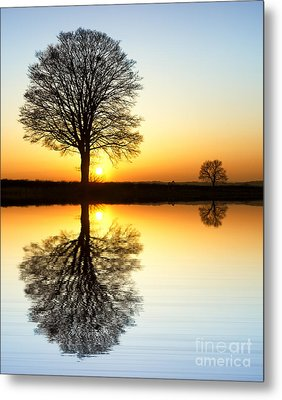 Winter Tree Reflections Metal Print by Tim Gainey