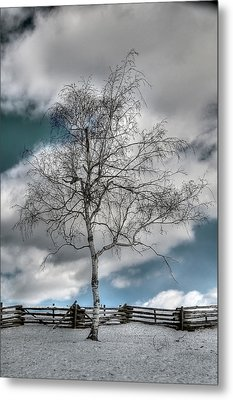 Winter Tree Metal Print by Todd Hostetter