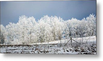 Winter Treeline Panorama Metal Print by John Haldane