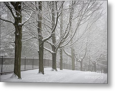 Winter Trees And Road Metal Print by Elena Elisseeva