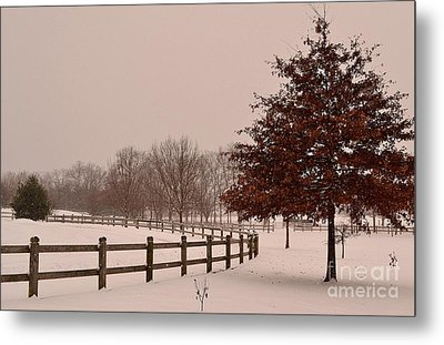 Winter Trees In Park Metal Print