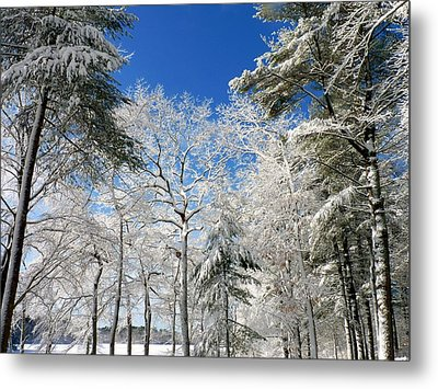 Metal Print featuring the photograph Winter Trees by Janice Drew