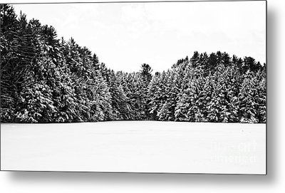Winter Trees Mink Brook Hanover Nh Metal Print by Edward Fielding