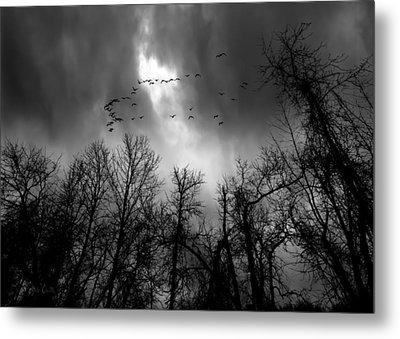 Winter Trees Moving Sky Metal Print by Bob Orsillo