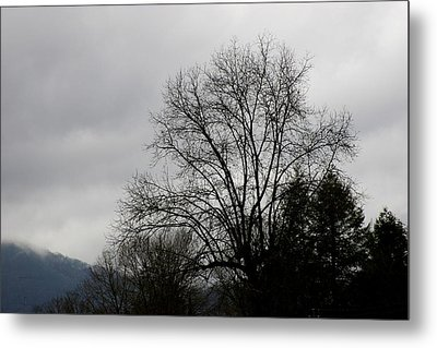Winter Trees Number Four Metal Print by Paula Tohline Calhoun