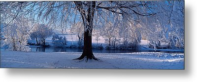 Winter Trees Perkshire Scotland Metal Print by Panoramic Images