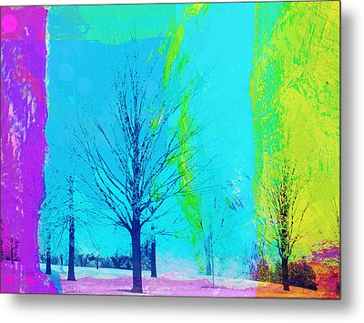 Winter Trees Metal Print by Susan Stone