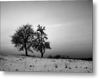 Winter Trees Metal Print by Tomasz Dziubinski