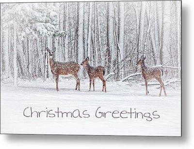 Winter Visits Card Metal Print by Karol Livote