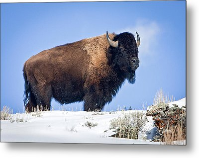 Metal Print featuring the photograph Winter Warrior by Jack Bell