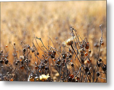 Metal Print featuring the photograph Winter Weeds by Karen Slagle