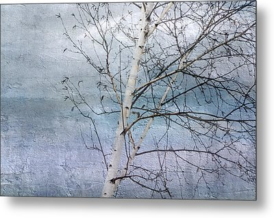 Winter White Birch  Metal Print
