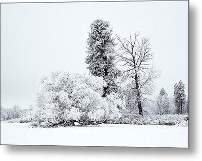 Winter White Metal Print by Mike  Dawson
