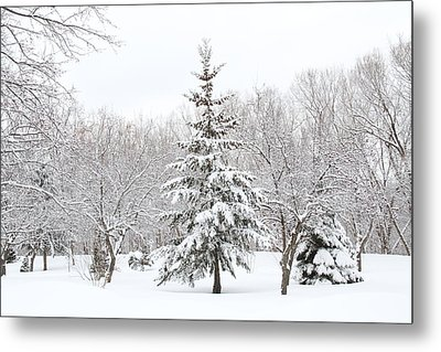 Winter White-out Metal Print