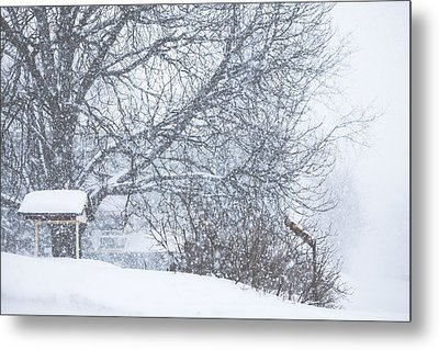 Metal Print featuring the photograph Winter White Out by Robert Clifford
