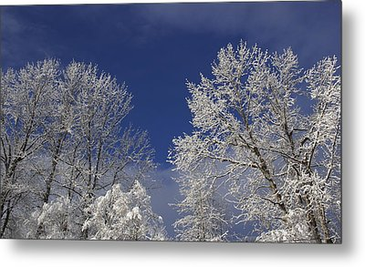 Winter White Metal Print by Sylvia Hart