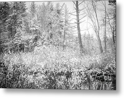 Winter Whites Metal Print by Sue OConnor