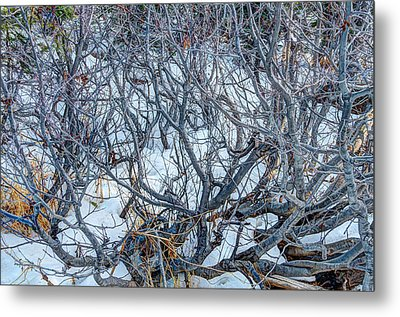 Metal Print featuring the photograph Winter Willow by Jan Davies