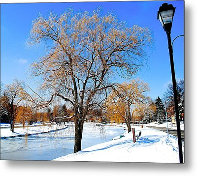 Winter Willow Metal Print by Frozen in Time Fine Art Photography