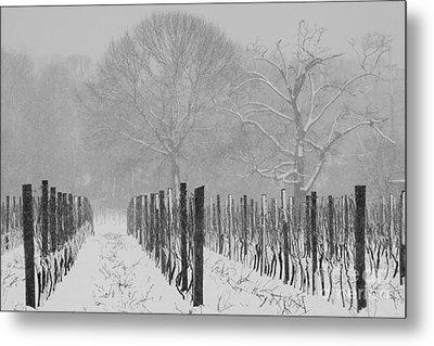 Winter Wine Metal Print by Steven Macanka