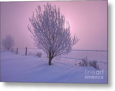 Winter Wonder Land Metal Print by Dan Jurak
