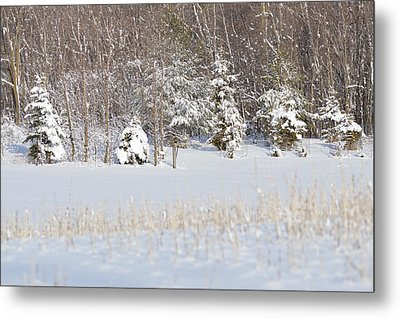 Metal Print featuring the photograph Winter Wonderland by Dacia Doroff
