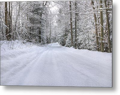 Winter Wonderland Metal Print by Donna Doherty