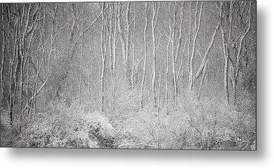 Winter Wood 2013 Metal Print