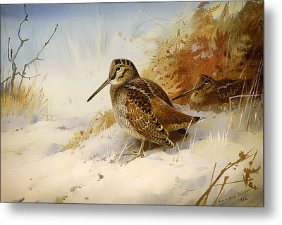 Winter Woodcock Metal Print by Mountain Dreams