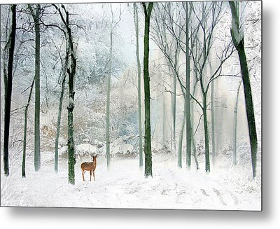 Winter Woodland Metal Print by Jessica Jenney