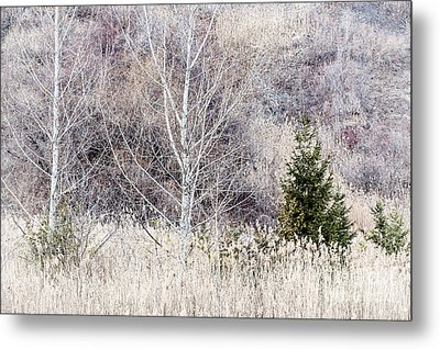 Winter Woodland With Subdued Colors Metal Print by Elena Elisseeva
