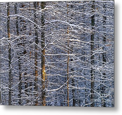 Metal Print featuring the photograph Winter Woods by Alan L Graham