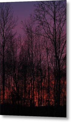 Winter Woods Sunset Metal Print by Karol Livote