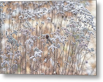 Metal Print featuring the photograph Winter by Yvonne Emerson AKA RavenSoul