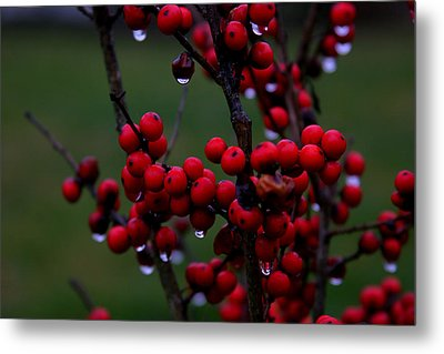 Winterberry Bush After The Rain Number 1 Metal Print
