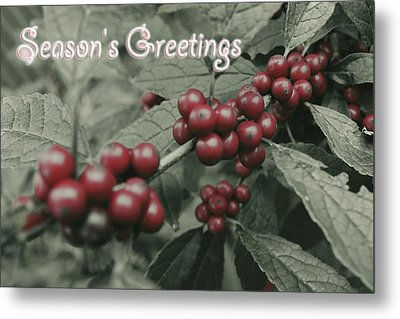 Winterberry Greetings Metal Print by Photographic Arts And Design Studio