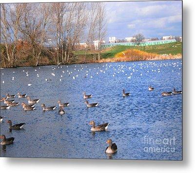 Wintering Birds - Mayesbrook Park Metal Print by Mudiama Kammoh
