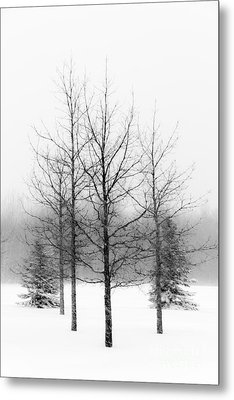 Winter's Bareness  Metal Print