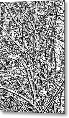 Winters Branches Metal Print