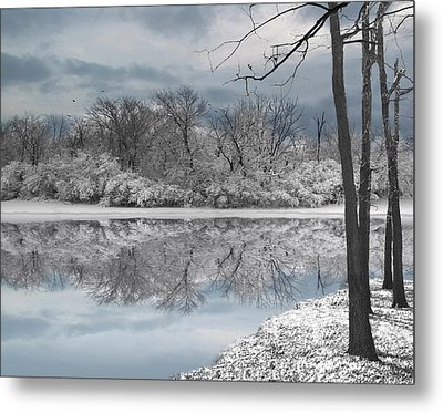 Winters Delight 6 - Limited Edition Metal Print