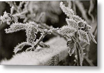 Winters Frost Metal Print by Karen Grist