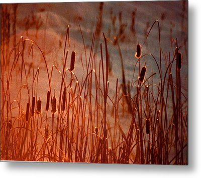 Winter's Glow Metal Print
