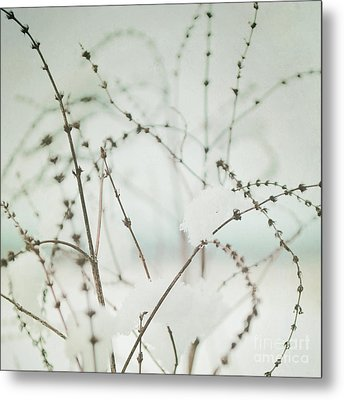 Winter's Magic Metal Print by Sharon Coty