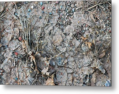 Metal Print featuring the photograph Winter's Mud by Allen Carroll
