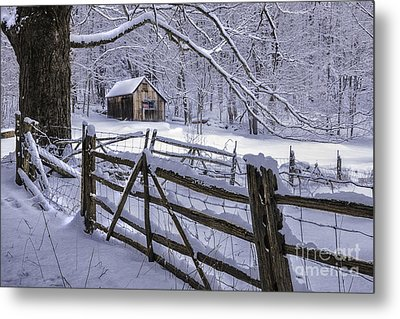 Winter's Mystique   Metal Print by Thomas Schoeller