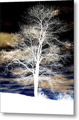 Winter's Night Sky Metal Print by Janine Riley