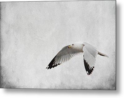 Winter's Return - Wildlife - Seagull Metal Print by Jai Johnson